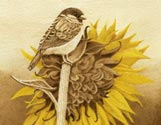 Bird Sunflower
