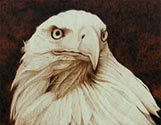 Eagle Head Portrait