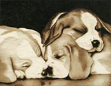 Sleeping Pups